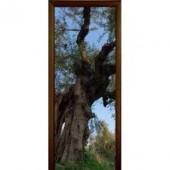 Стеклянная межкомнатная дверь Forest
